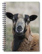 Barbados Blackbelly Sheep Portrait Spiral Notebook