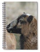 Barbados Blackbelly Sheep Profile Spiral Notebook
