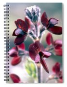 Barbed Thermopsis Or Black Pea Spiral Notebook