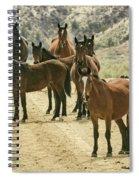 Barcus Creek Band Spiral Notebook