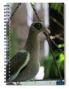 Bare Eyed Pigeon Spiral Notebook