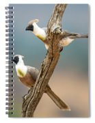 Bare-faced Go-away-birds Corythaixoides Spiral Notebook