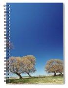 Bare Trees Along Shore Of Lake Manitoba Spiral Notebook