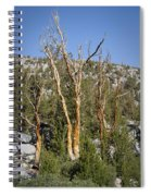 Bare Trees Spiral Notebook