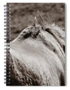Bareback Spiral Notebook