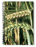 Barley, Green Stage Spiral Notebook