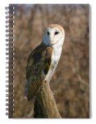 Barn Owl 2 Spiral Notebook