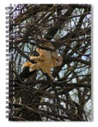 Barn Owl In A Tree Spiral Notebook