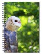 Barn Owl Looking Skyward Spiral Notebook