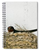 Barn Swallow Nesting Spiral Notebook