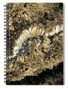 Barnacles At Low Tide Spiral Notebook