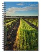 Barossa Vineyard Morning Spiral Notebook