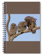 Barred Owl Family Spiral Notebook
