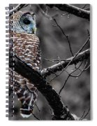 Barred Owl Hungry  Spiral Notebook