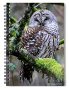 Barred Owl In Tree Spiral Notebook