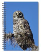 Barred Owl Portrait Spiral Notebook