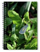 Barred Yellow Resting Spiral Notebook