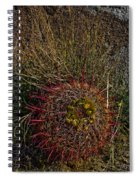 Barrel Cactus Top View Spiral Notebook