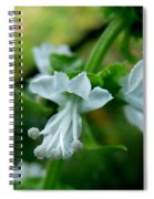 Basil Bloom Spiral Notebook