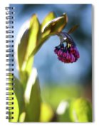 Basking Beauty Spiral Notebook