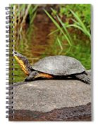 Basking Blanding's Turtle Spiral Notebook