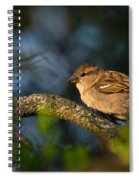 Basking In The Morning Light Spiral Notebook