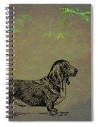 Basset Hound  Spiral Notebook