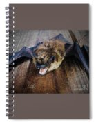 Bat  Spiral Notebook