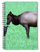 Elk's Bath Time Spiral Notebook