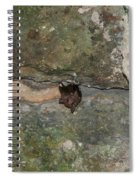 Bats Inside The Pyramid At Grupo Nohoch Mul At The Coba Ruins  Spiral Notebook