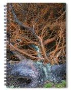 Battered Cypress With Orange Alga Spiral Notebook