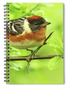Bay-breasted Warbler Spiral Notebook