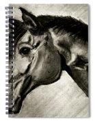 My Friend The Bay Horse Spiral Notebook