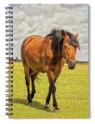 Bay Pony Spiral Notebook
