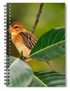 Baya Weaver Spiral Notebook