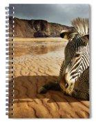 Beach Zebra Spiral Notebook