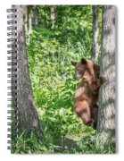 Bear Cub Climb Spiral Notebook