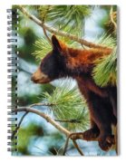 Bear Cub In A Tree 3 Spiral Notebook