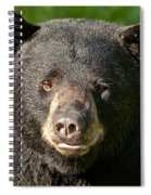 Bear Face Spiral Notebook