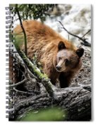 Bear In Trees Spiral Notebook
