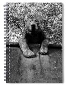 Bear On The Wall Spiral Notebook
