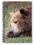 Bear Sleeping Spiral Notebook