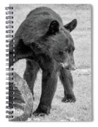 Bear's Log Stash Of Treats - Black And White Spiral Notebook