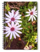 Beautiful African White Daisies Spiral Notebook