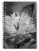 Beautiful Anyway Spiral Notebook