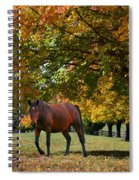 Beautiful Bay Horse In Fall Spiral Notebook