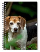 beautiful Beagle Spiral Notebook