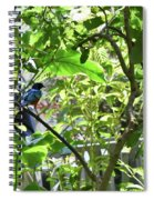 Beautiful Bird Perched In A Tree Spiral Notebook