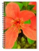 Beautiful Blossom Spiral Notebook