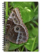 Beautiful Blue Morpho Butterfly Resting In A Garden  Spiral Notebook
